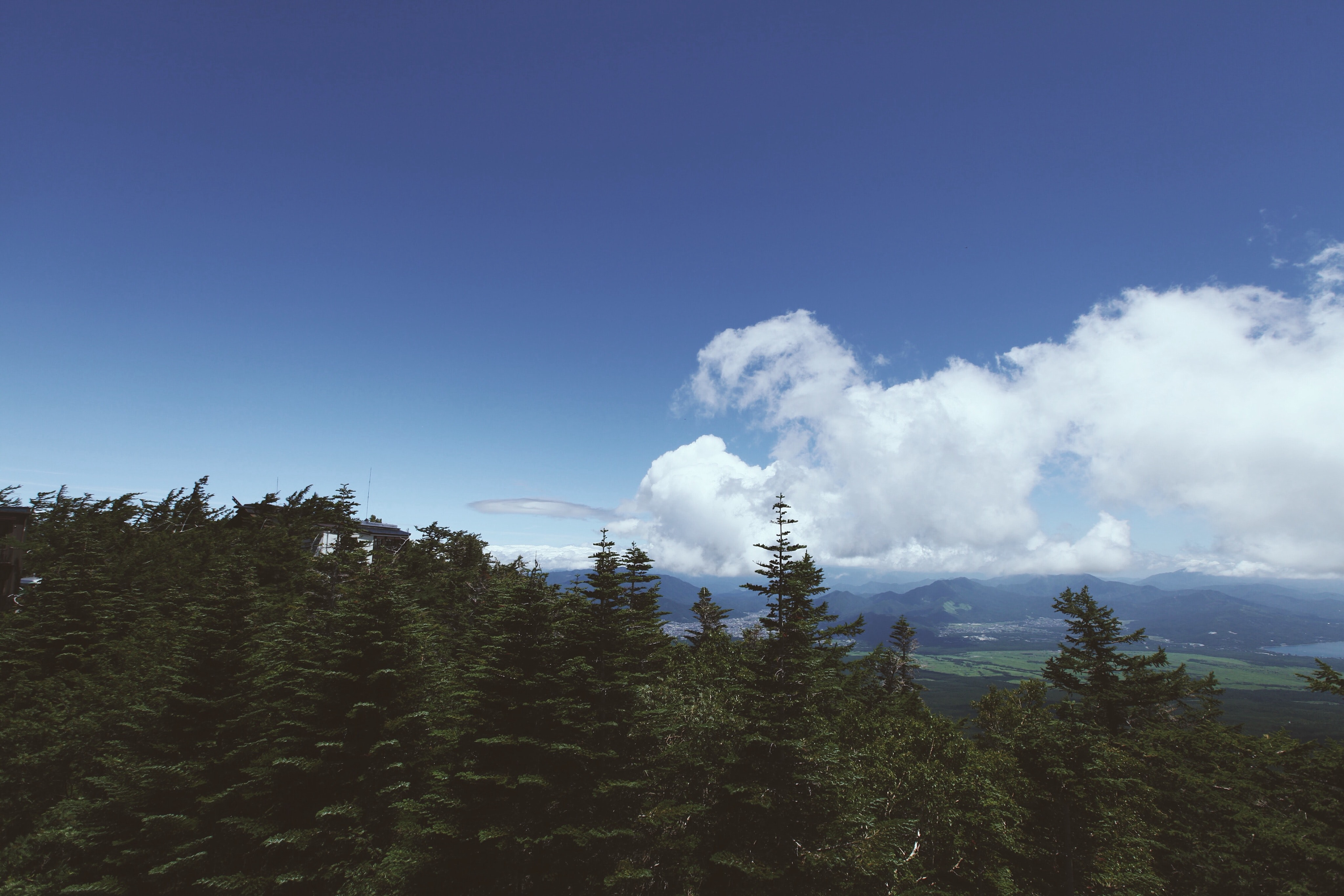 An evergreen forest obscuring the view on a mountain valley under fluffy clouds