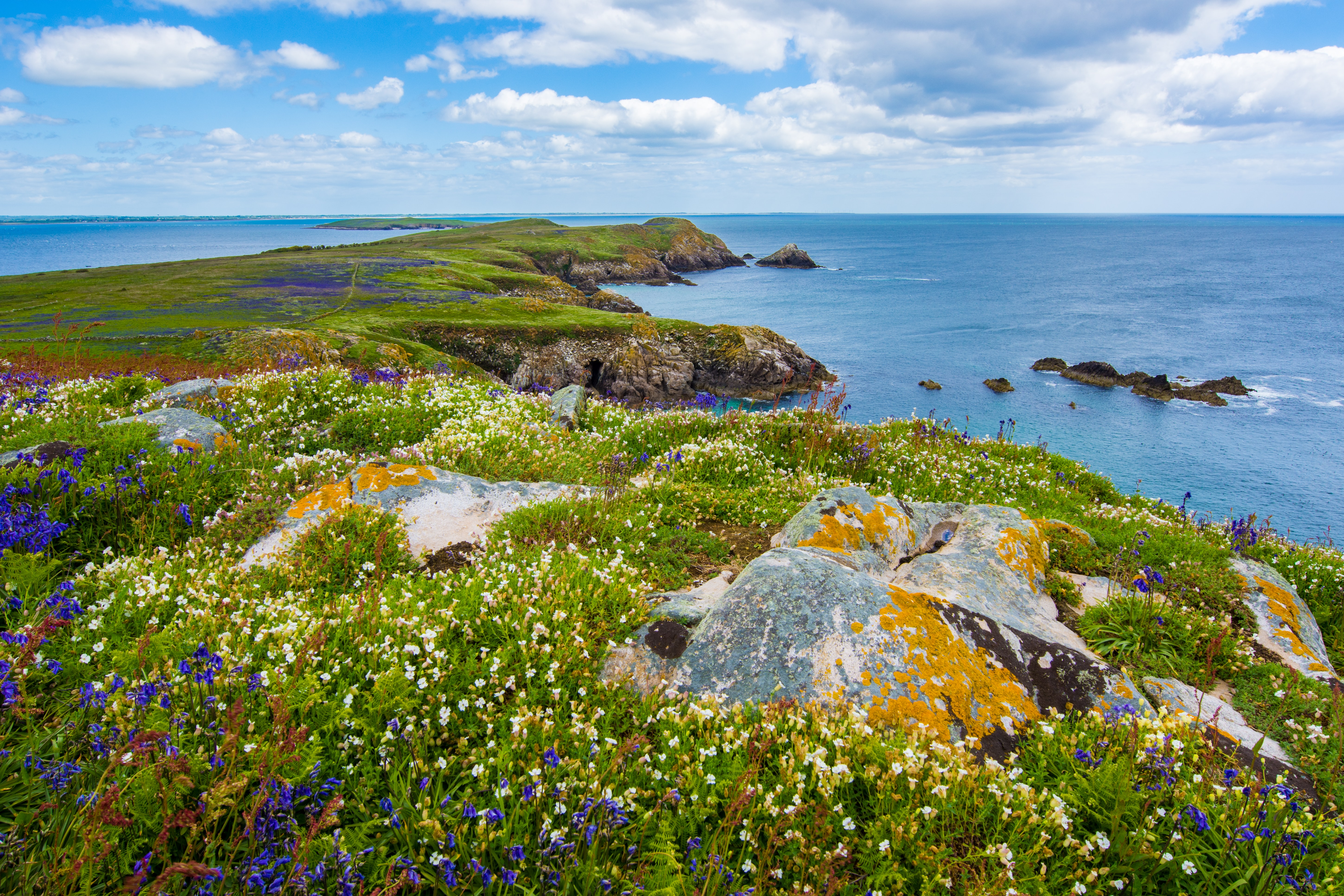 White and purple flowers on a grassy peninsula surrounded by azure sea