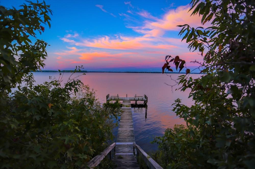 brown dock in body of water near trees