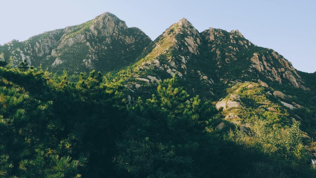 Fir trees on mountain slopes