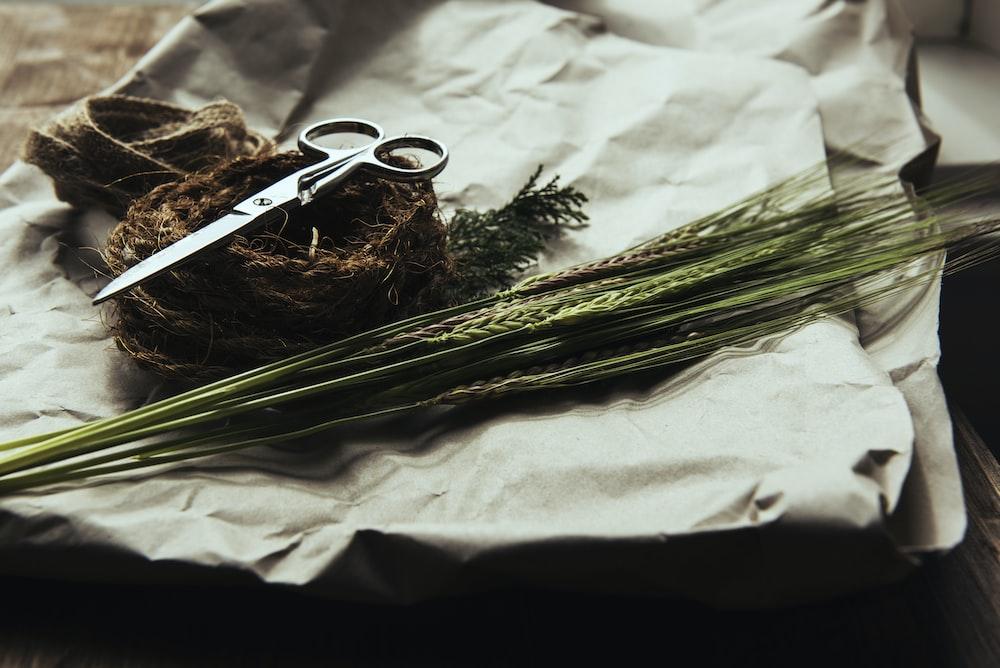 stainless steel scissors on green wheat grass