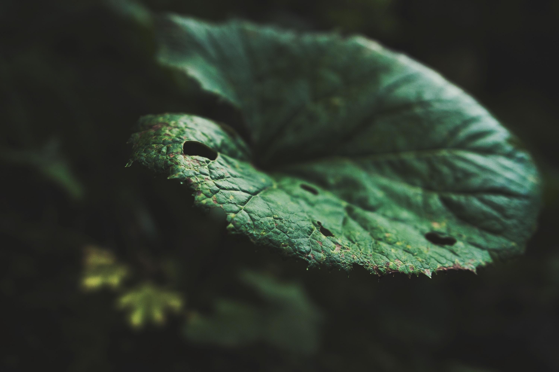 A macro shot of a round dark green leaf against a dark background
