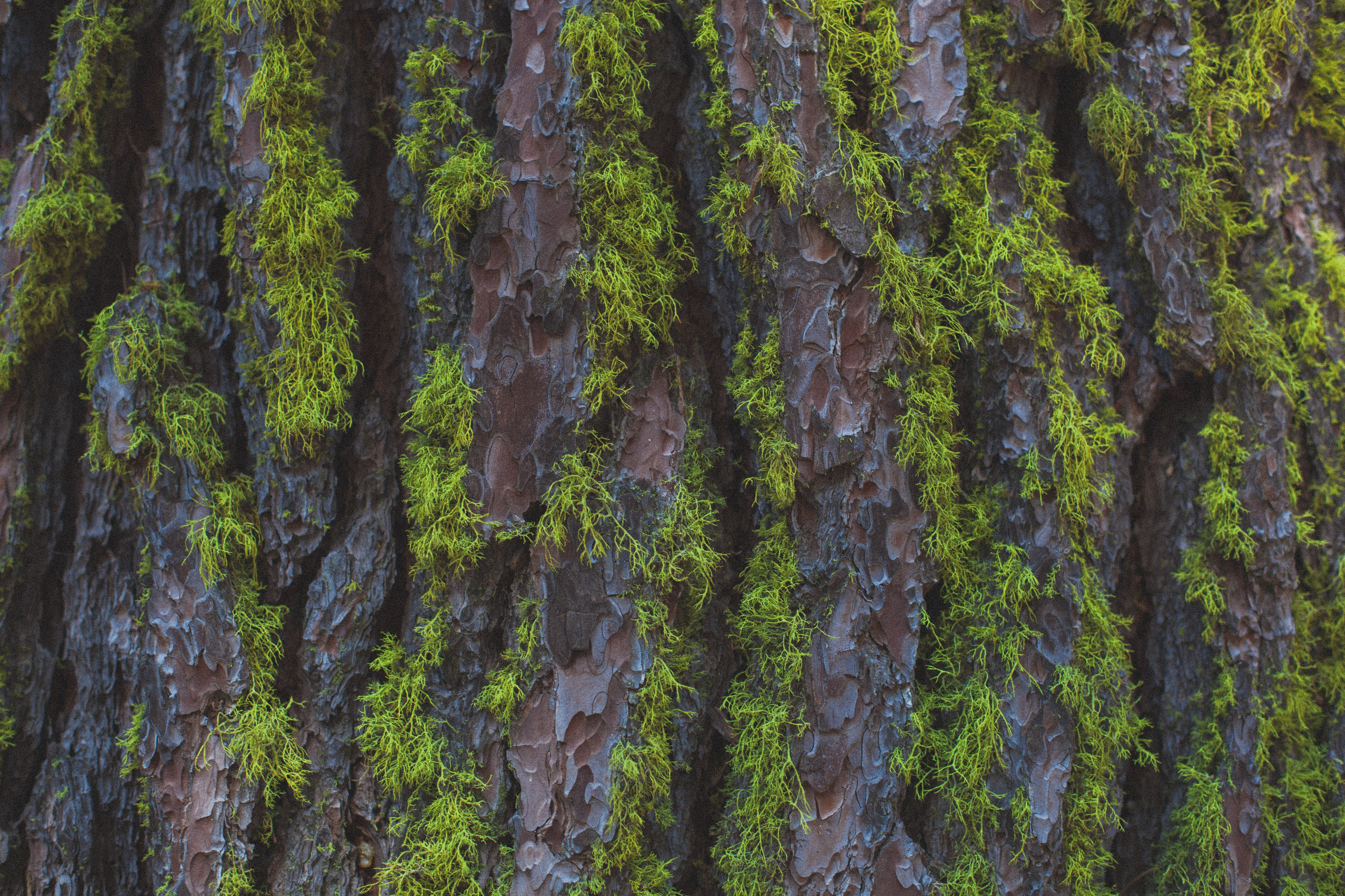 Close-up of green moss on the rough bark of a tree