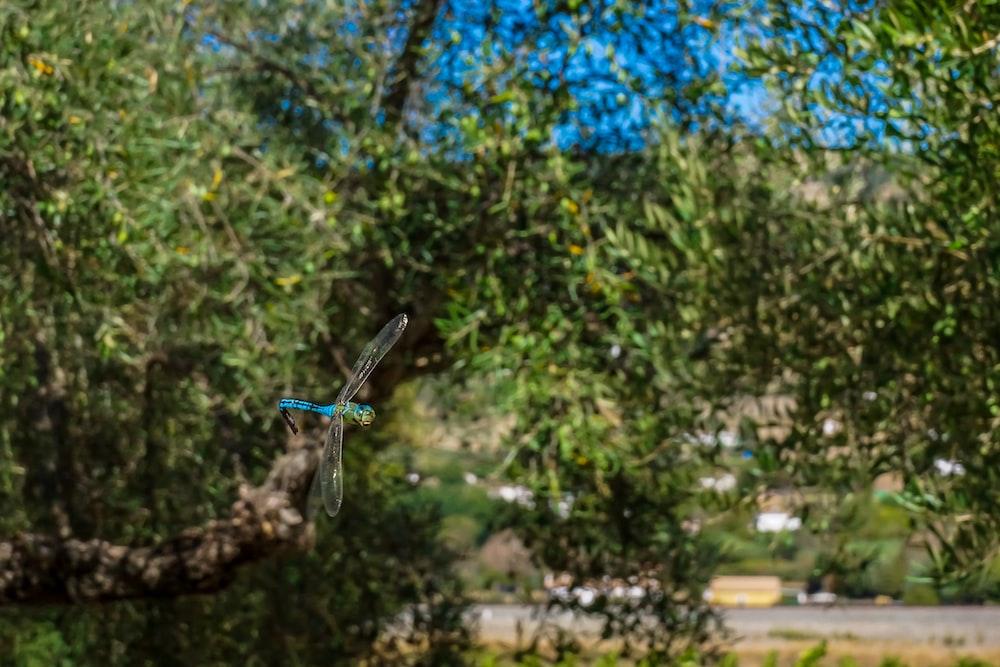 dragonfly flying near green tree