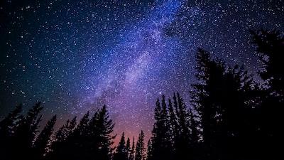 Trees against purple night sky