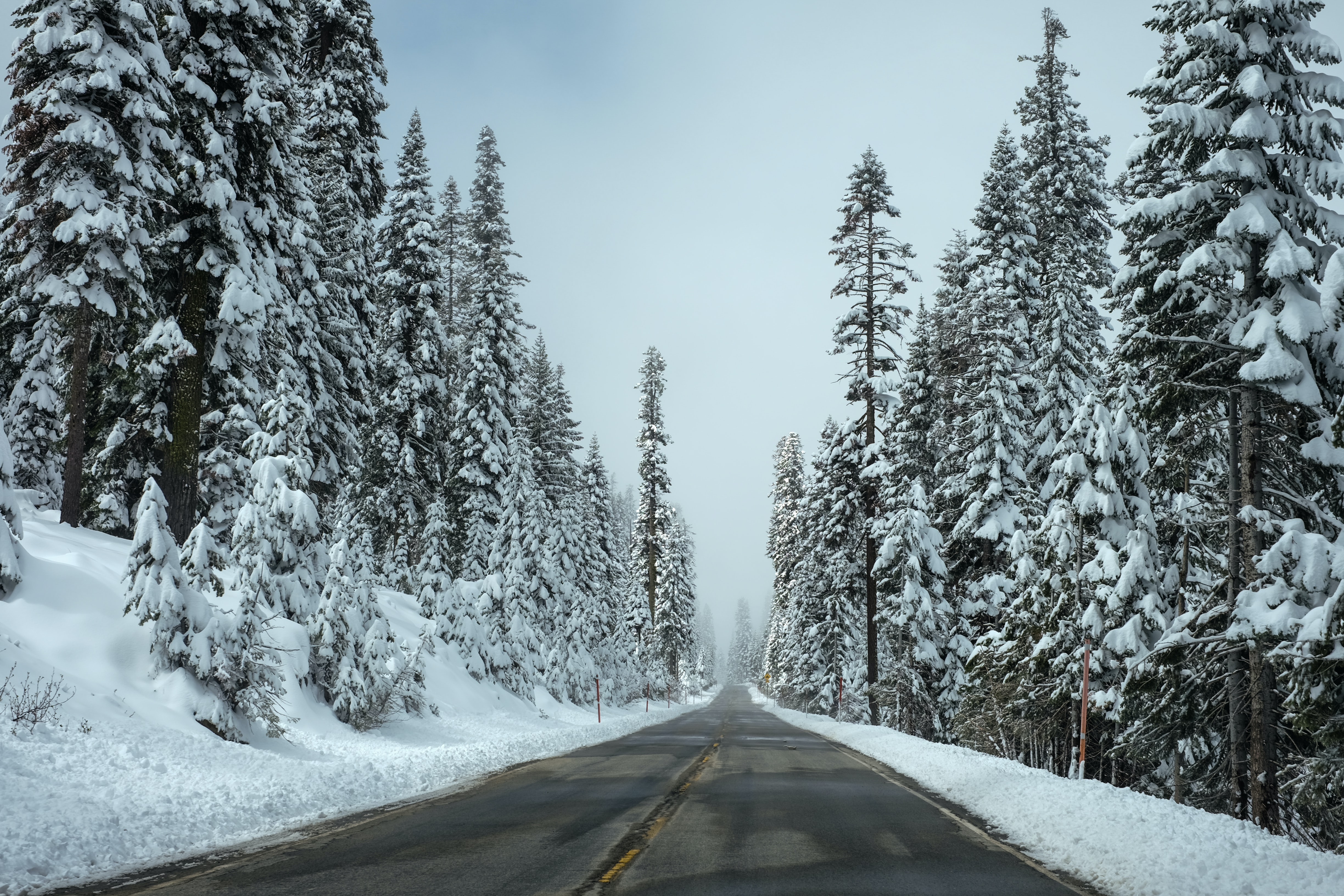 An empty asphalt road lined with snow-topped conifers
