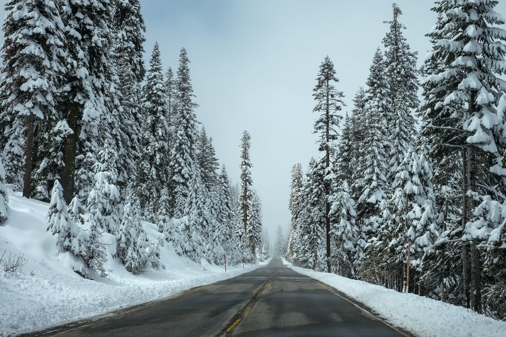road surrounded by pine trees with white snow during daytime