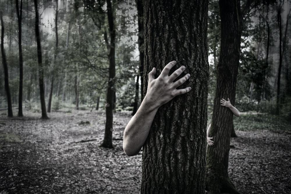 صورة مرعبة لاشباح تحتضن الاشجار وسط الغابة