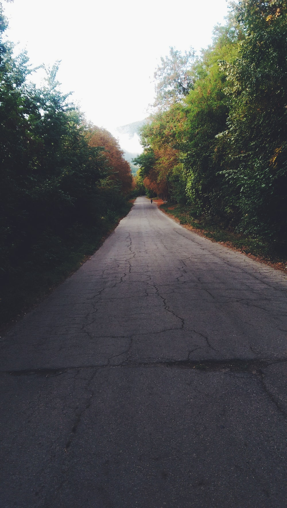 empty road between trees under white sky
