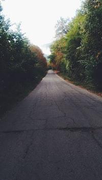 Kies utakon