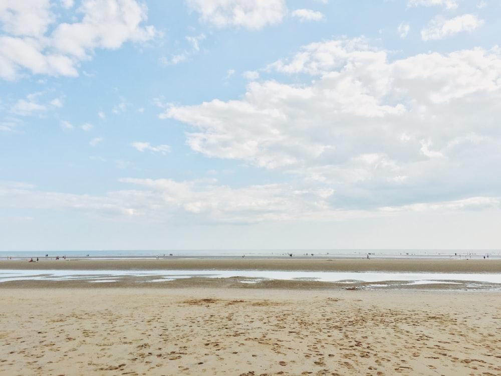 shoreline during daytime