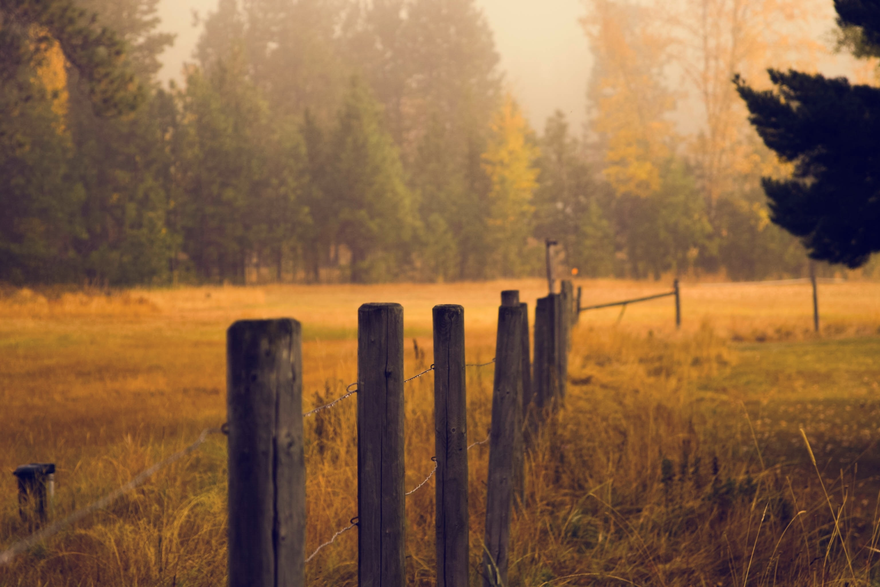 gray wooden fence post near green leaf trees at daytime