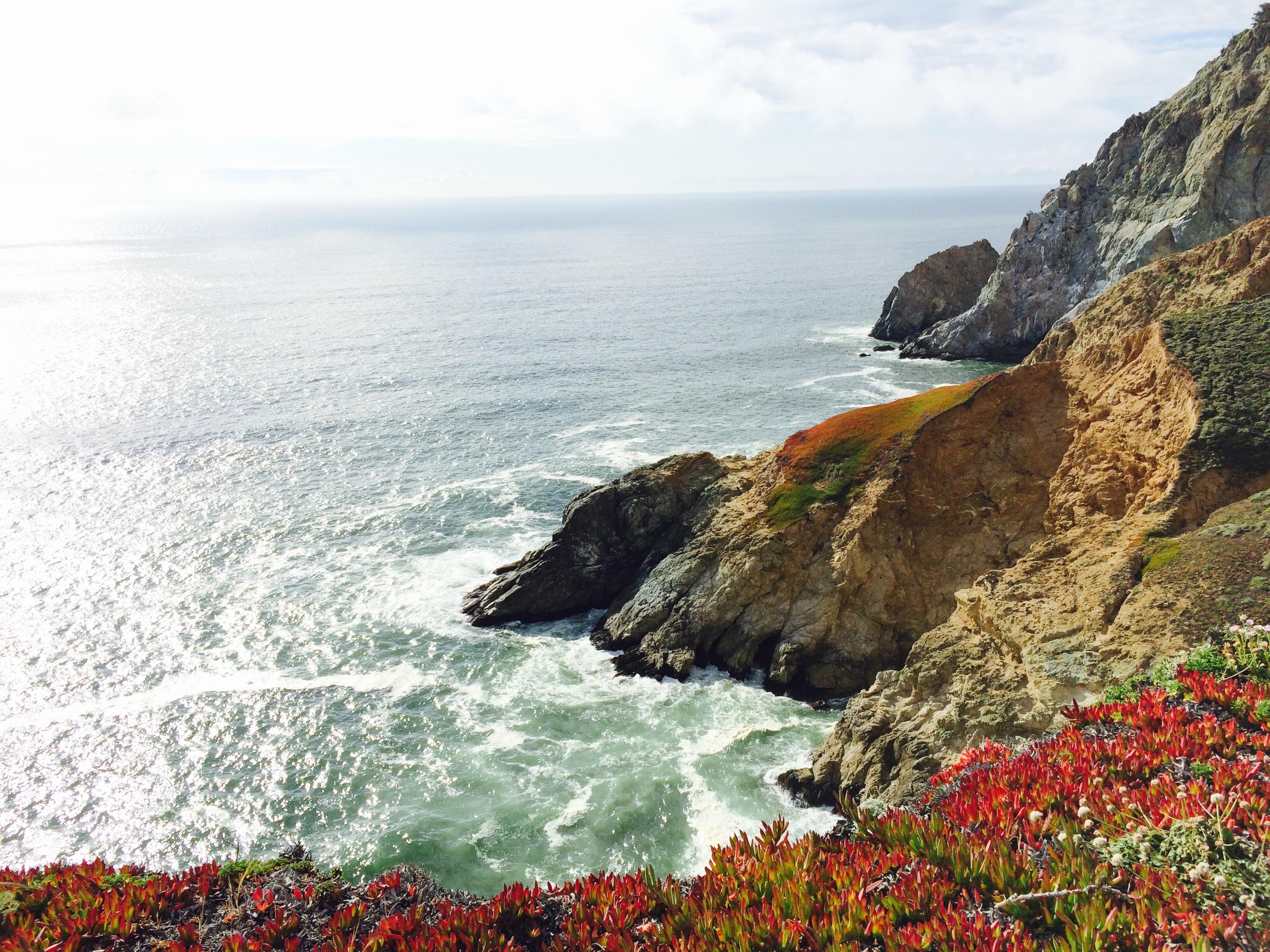 Cliff edge with flowers overlooking rocky ocean coastline at Devil's Slide