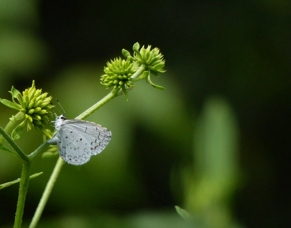 macro photography of white butterfly hanging on green plant