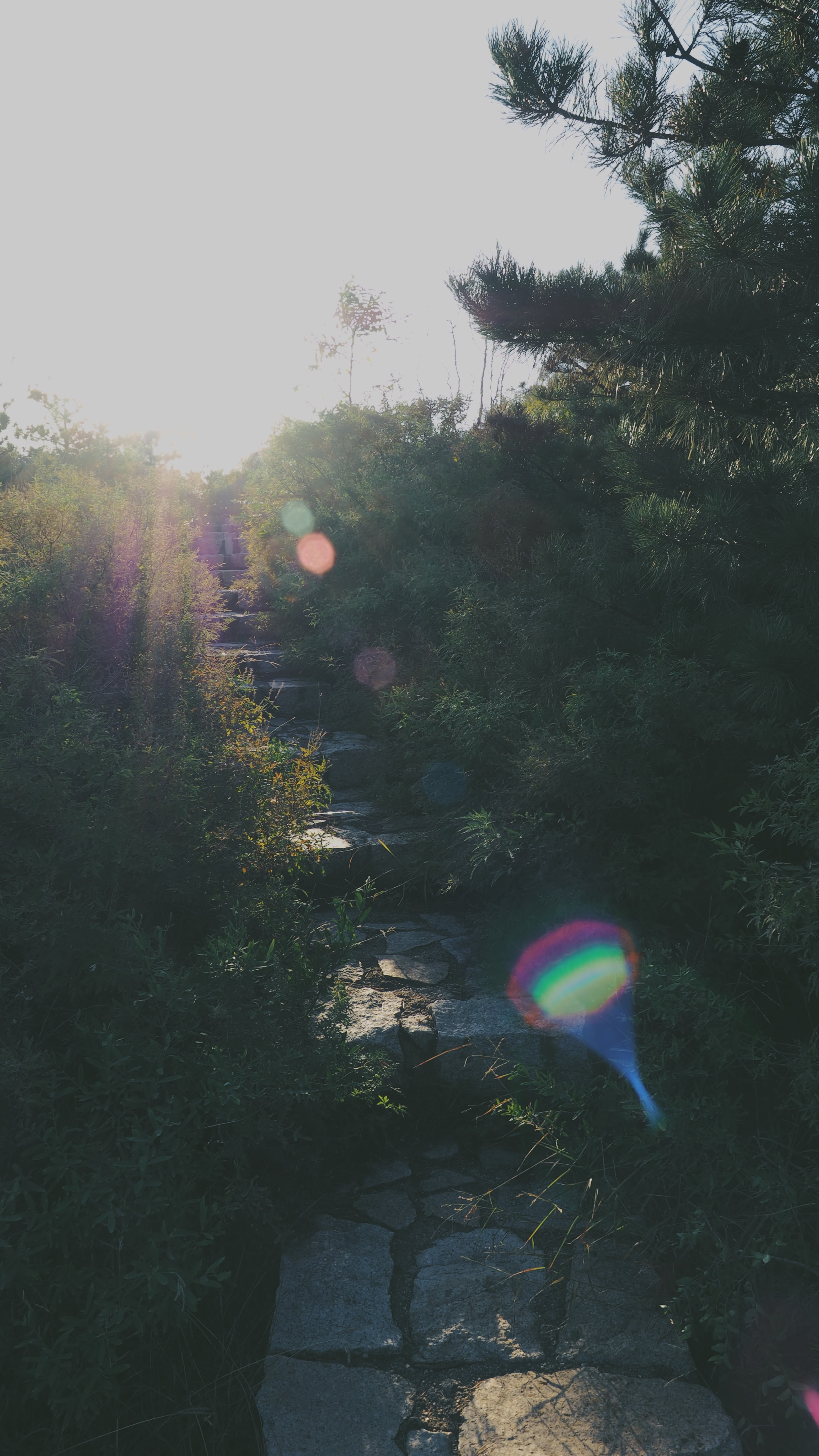 A stepping stone path up a hill with a rainbow color light glossing through