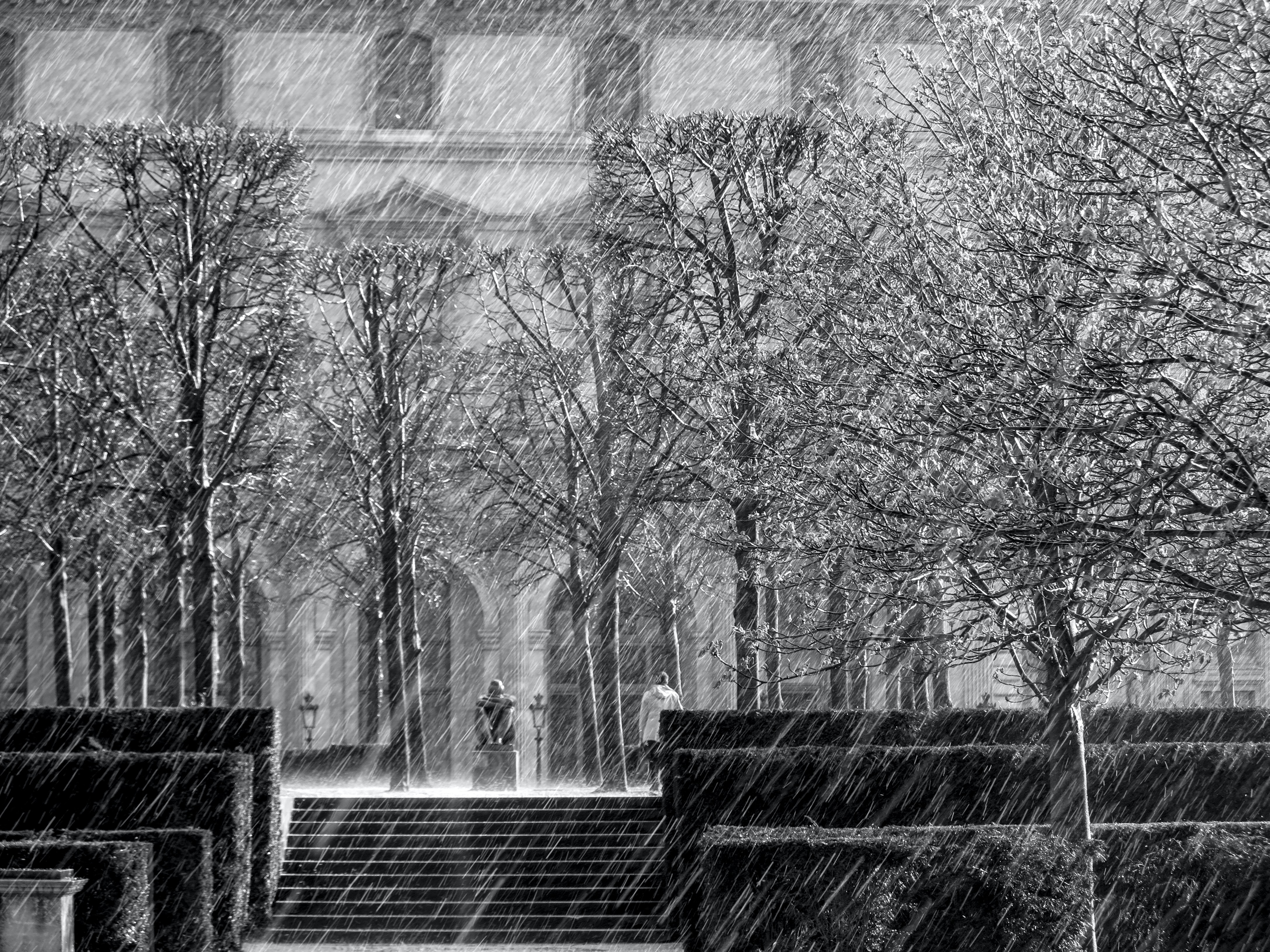 A black and white shot of rain coming down amongst trees outside a library in Paris