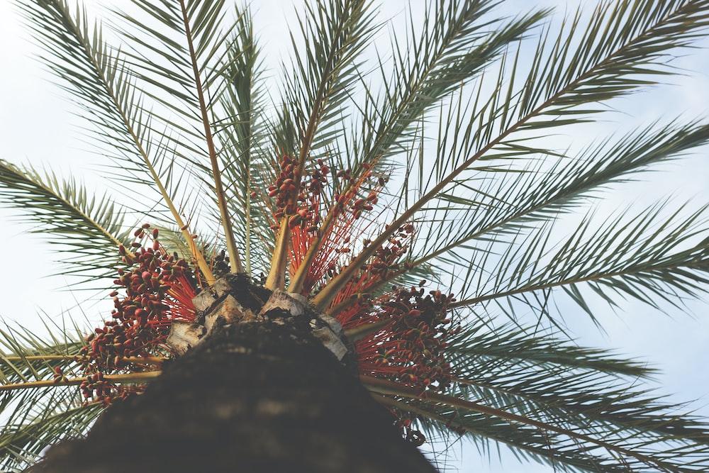 green palm leaf tree