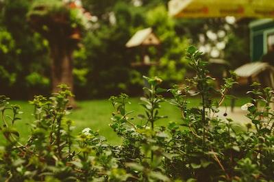 Flowering garden bushes