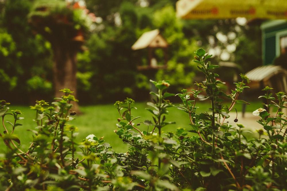 tilt shift lens photo of leaf
