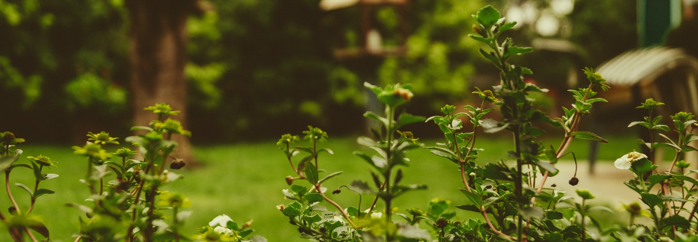 A Guide to Painless Gardening
