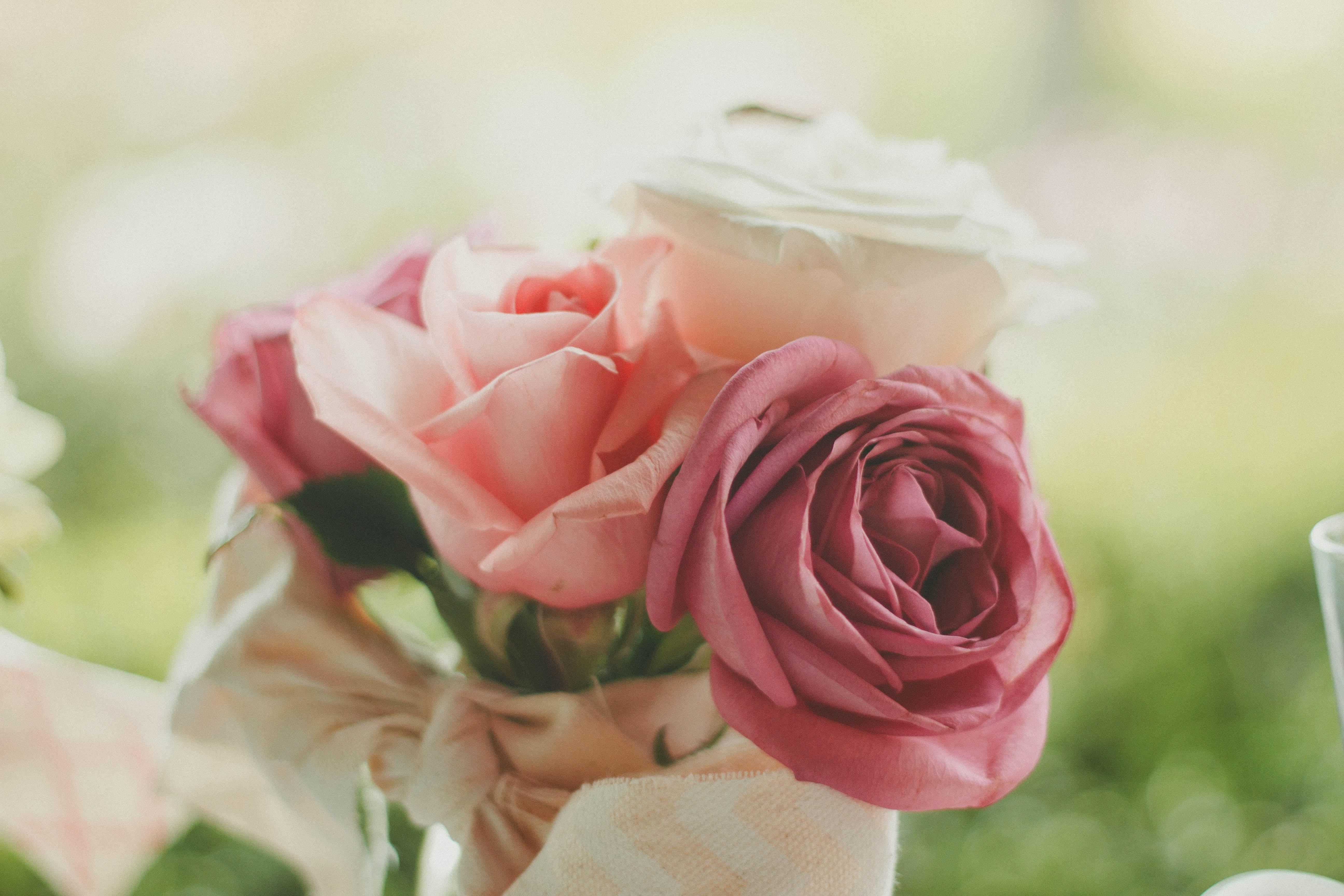 Closeup shot capturing a beautiful pink rose and its petals from the Walnut Creek
