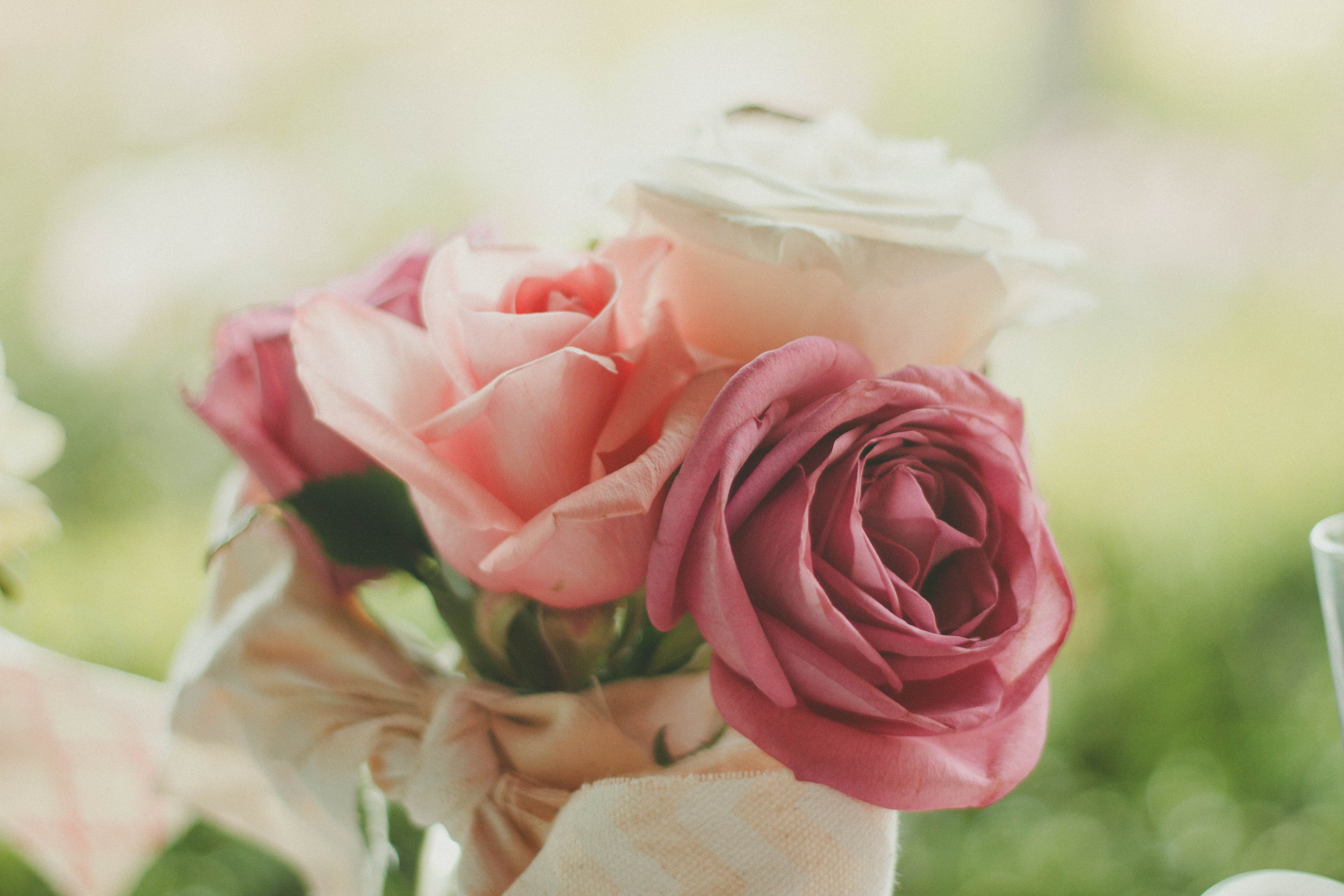 pink and white roses closeup photography