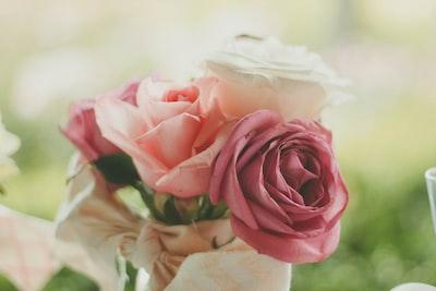 Rose and petals at Walnut Creek