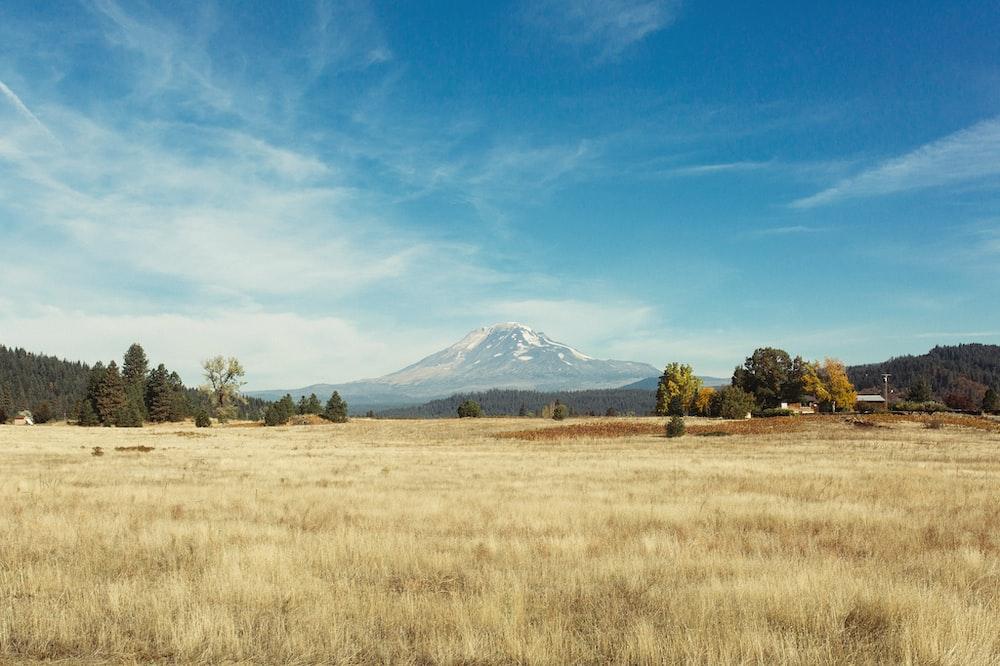 wheat field near mountain