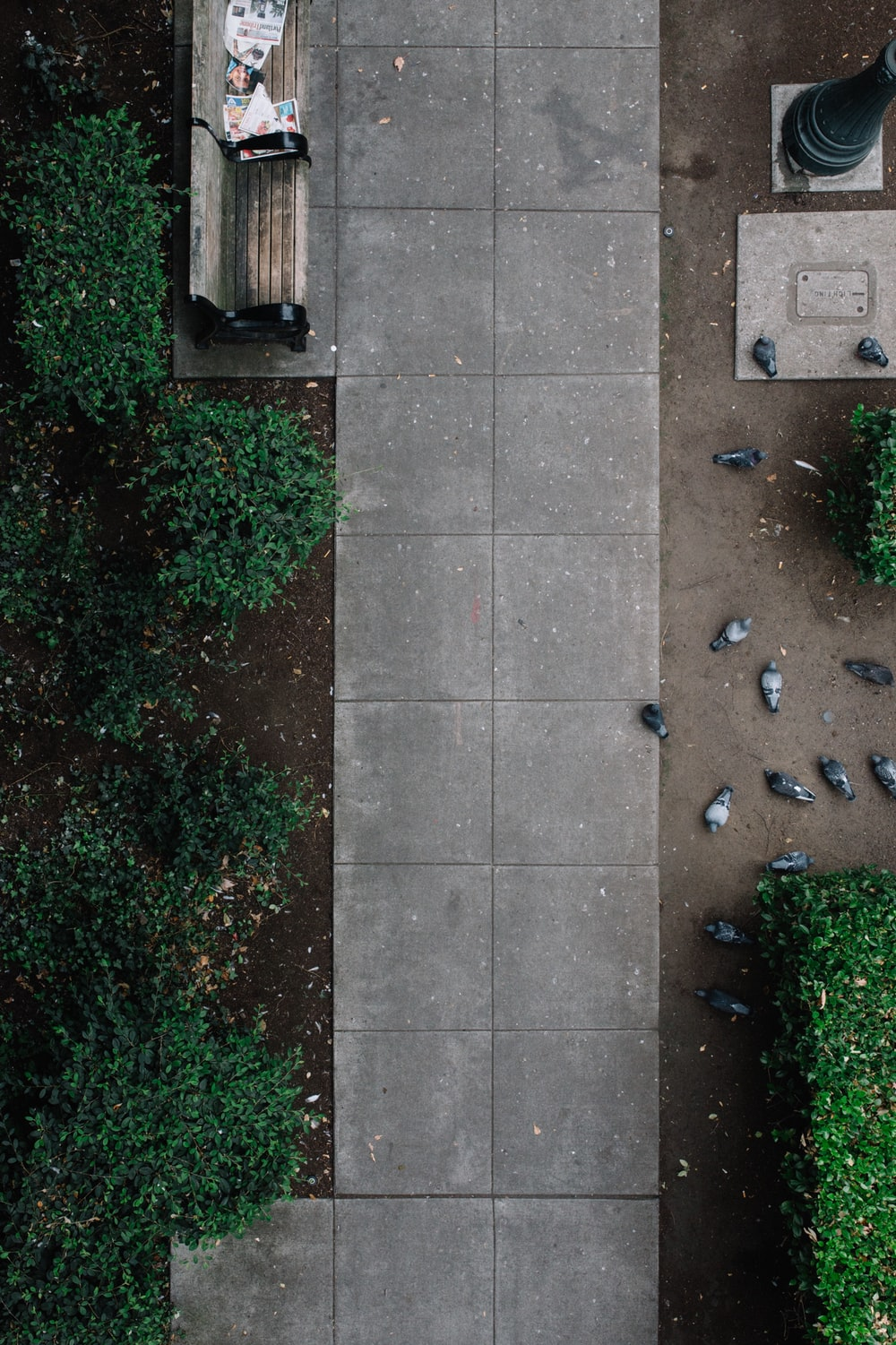 aerial photo of park with gray pigeons