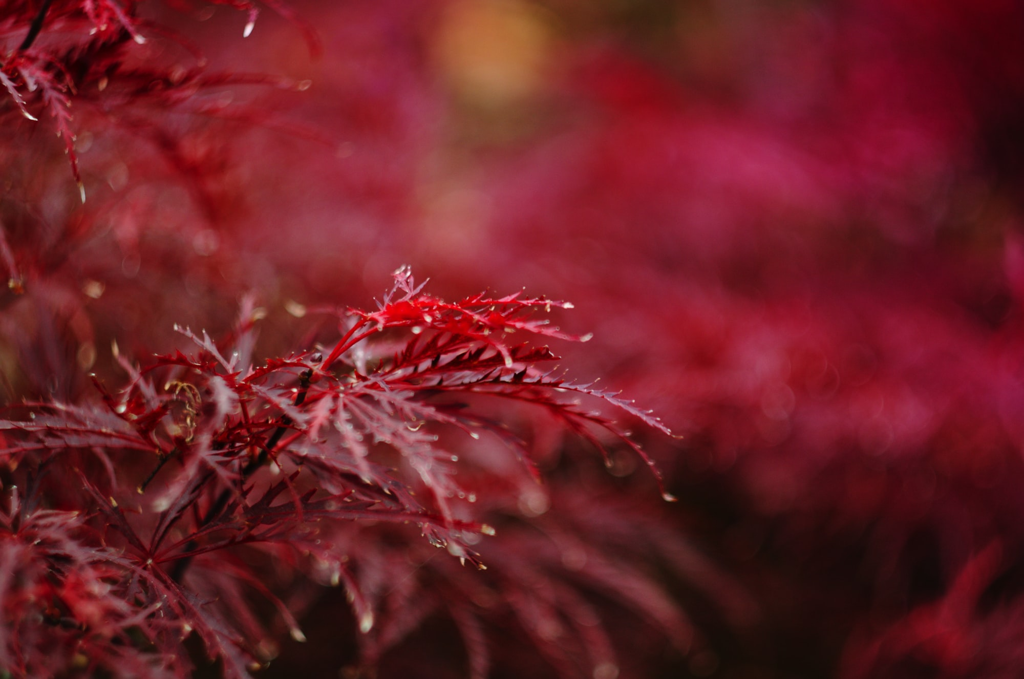 red petaled flower closeup photography