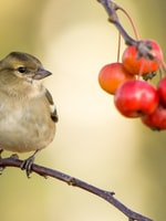 Gardeners Keep Feeding Your Wild Birds During the Winter