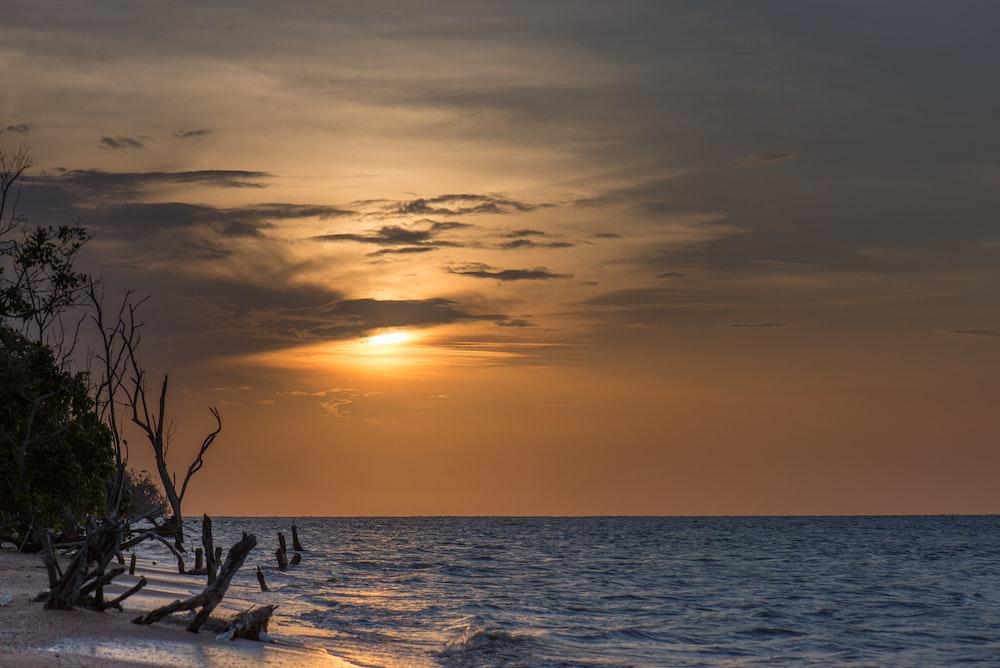 driftwood on shore