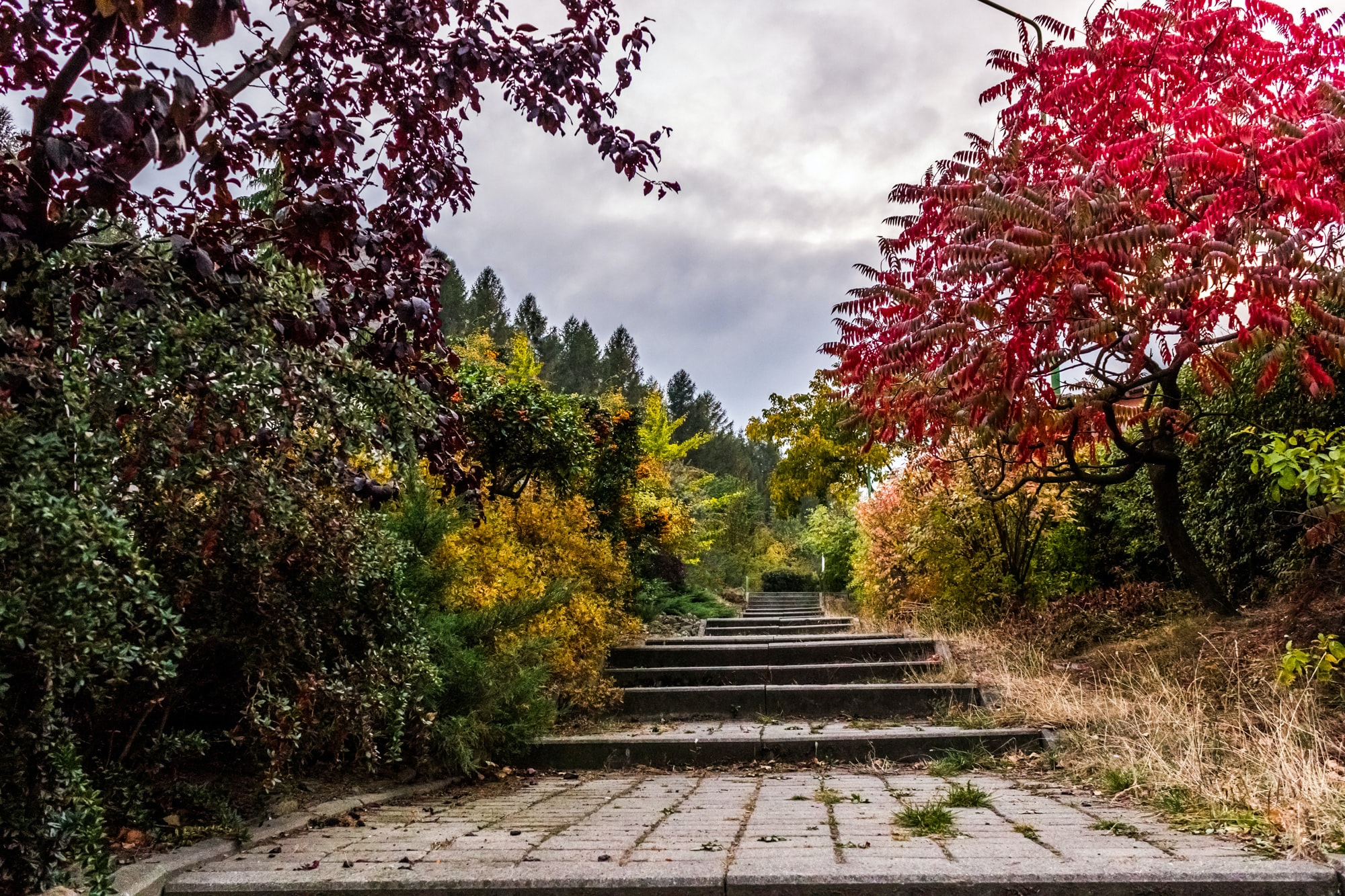 A gradual stairway path in Bielawa covered with trees and colorful foliage