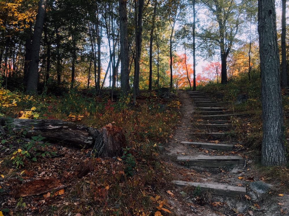 stairs near tree during daytime