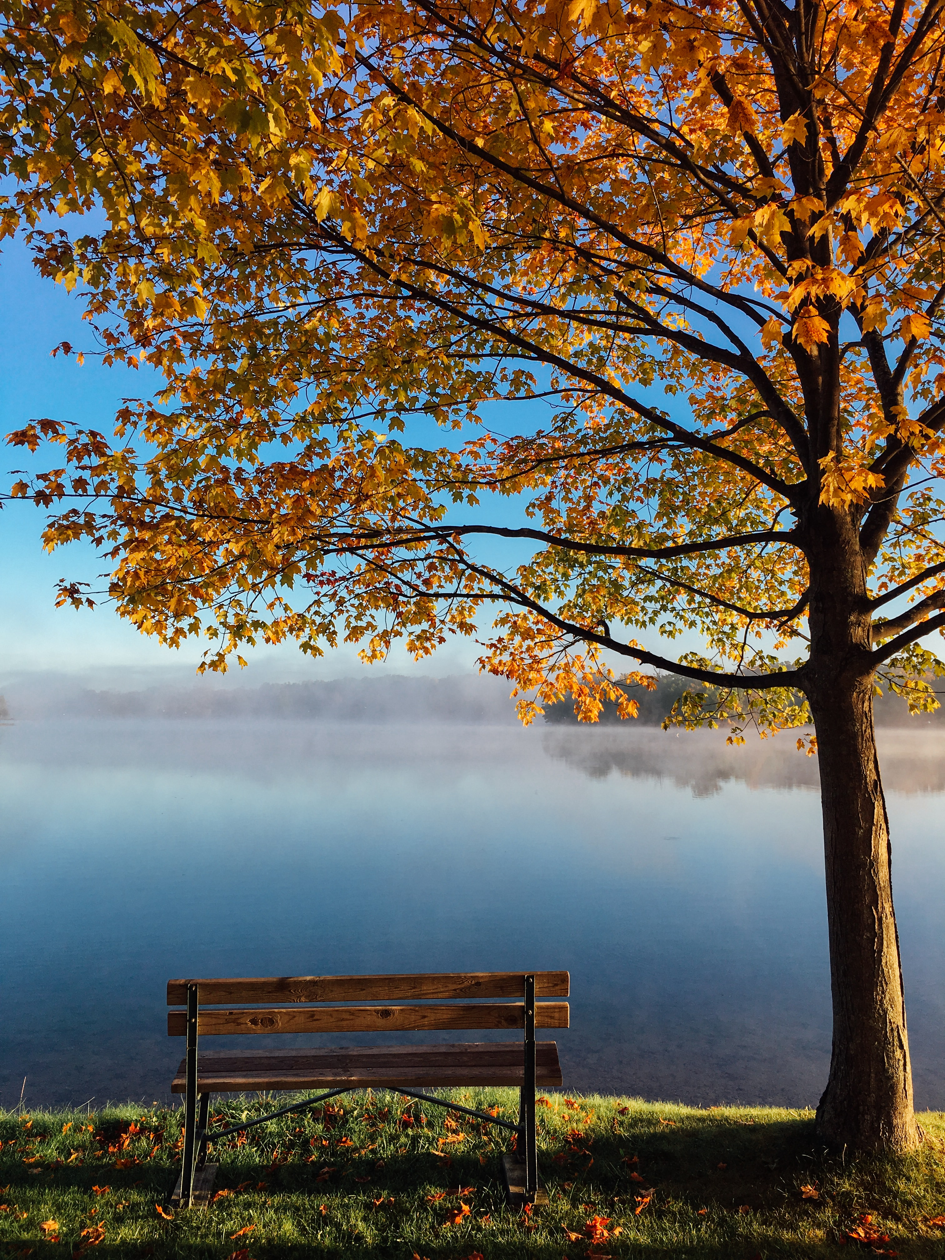 A wooden bench under an autumn tree right on the shore of a misty lake
