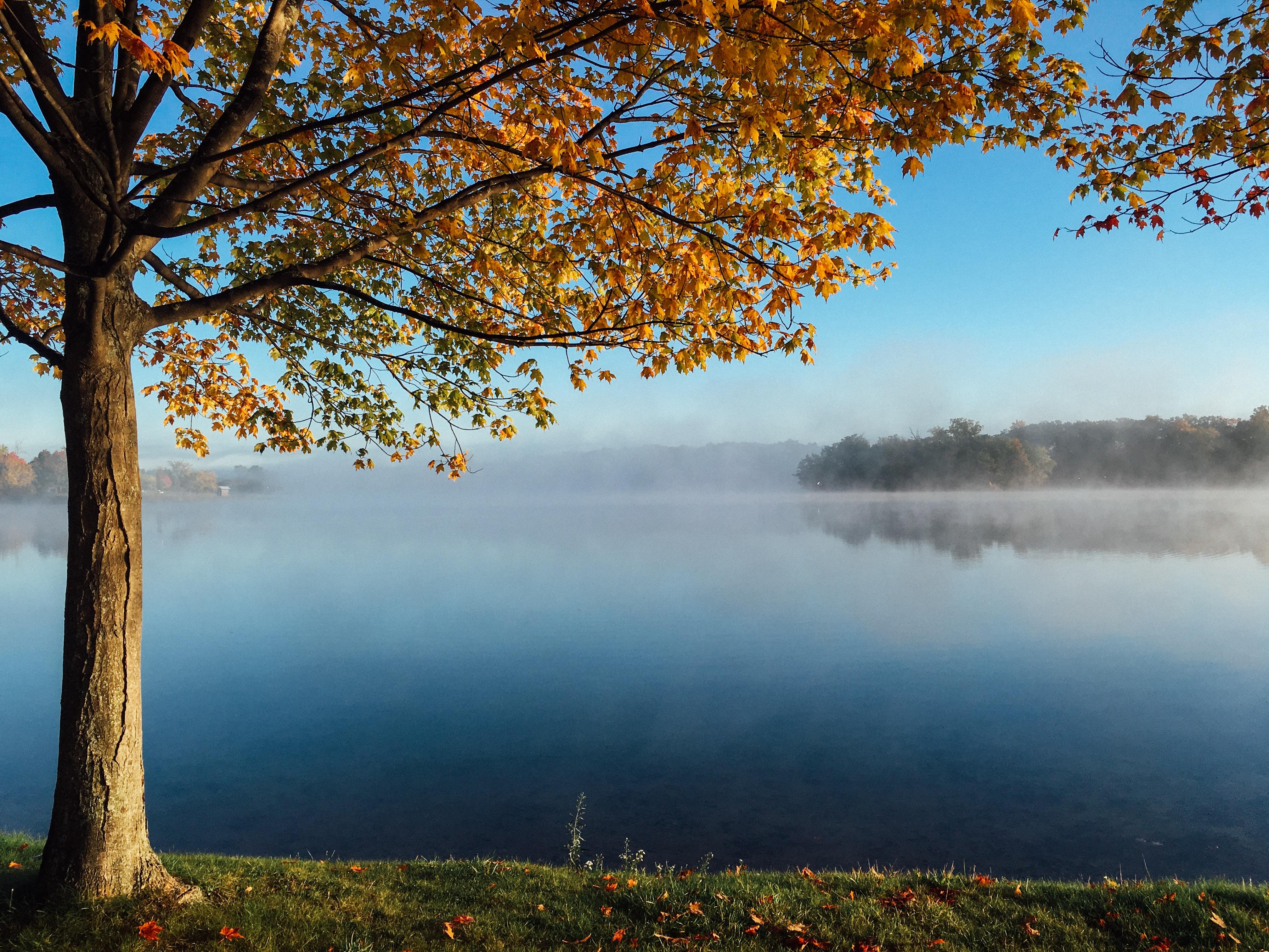 brown leaf tree facing the lake