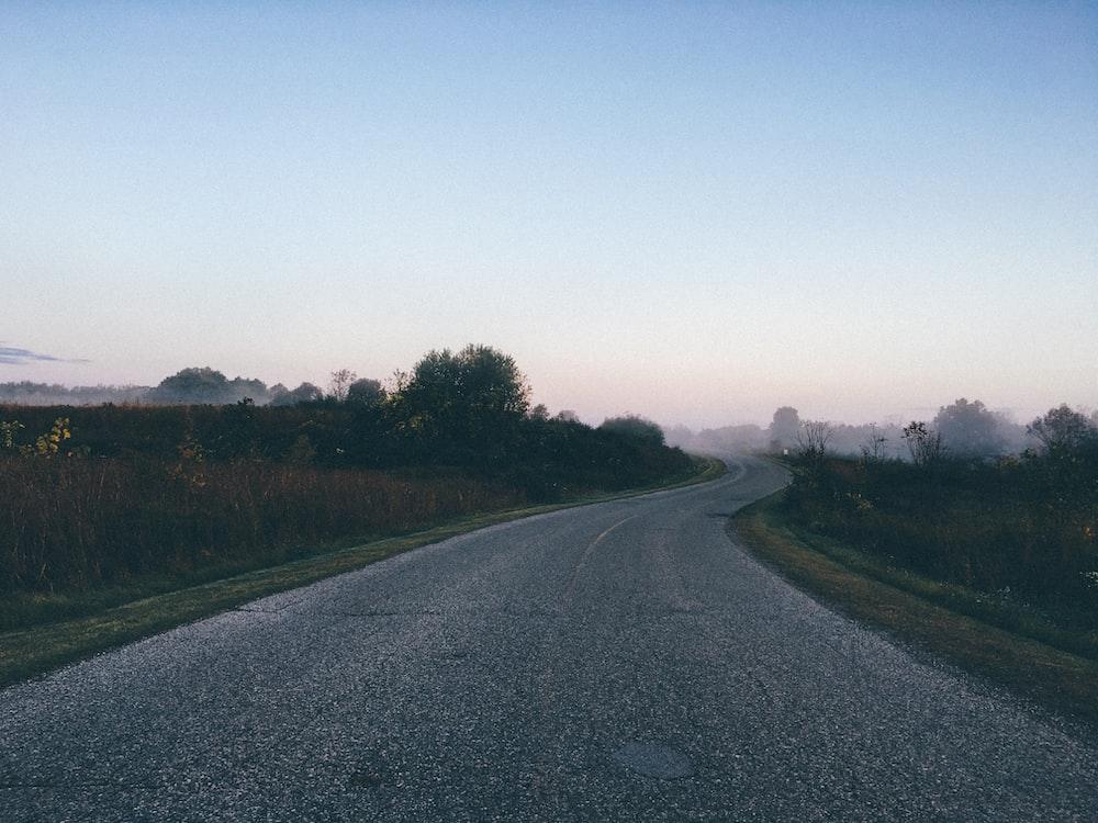 empty road between green leaf trees