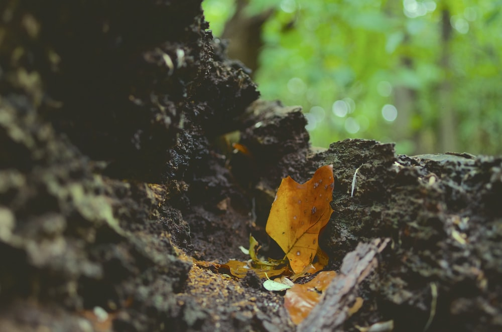 selective focus photography of fallen dry leaf