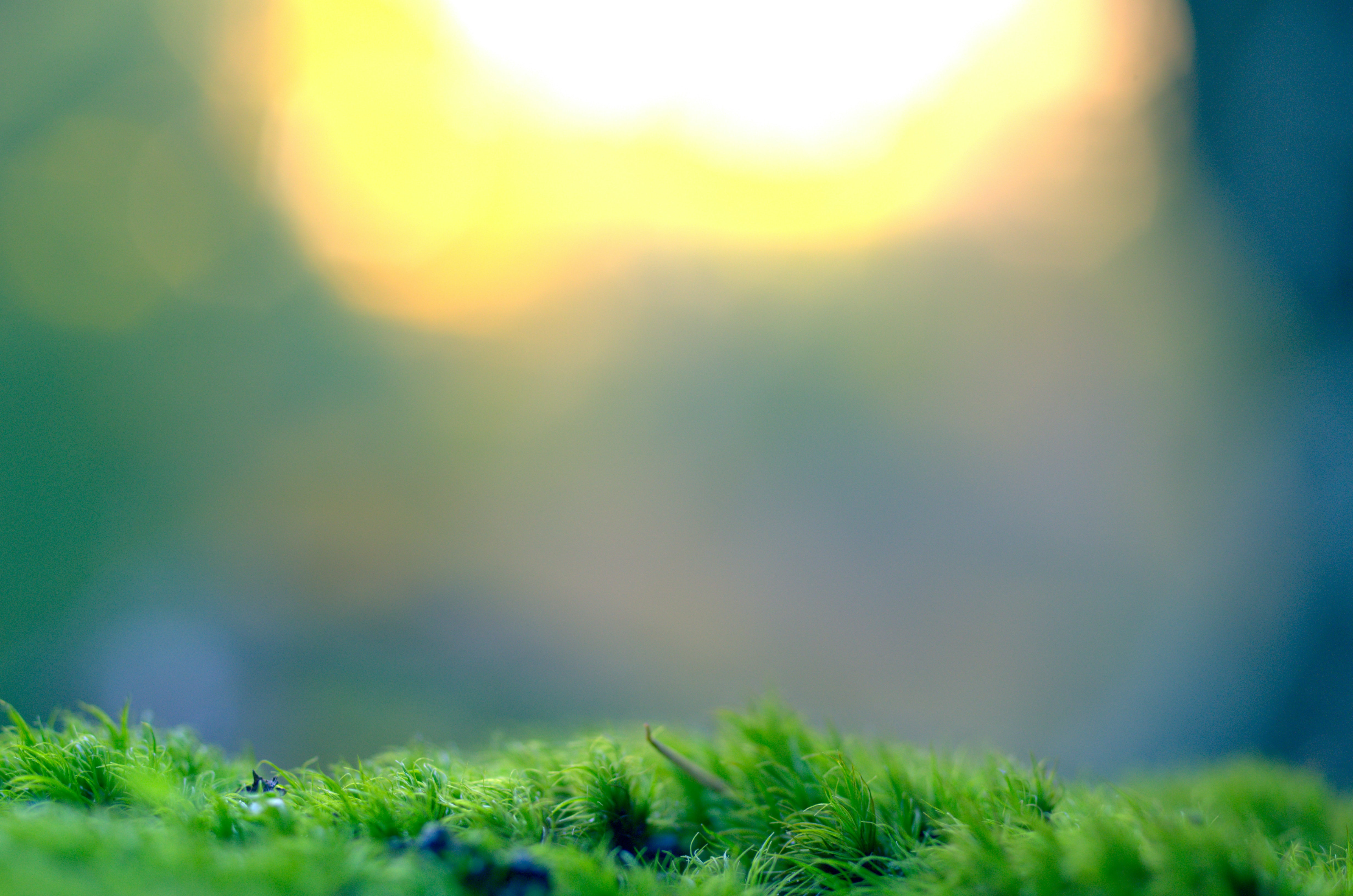 Tiny blades of a lush green grass under a blurry light