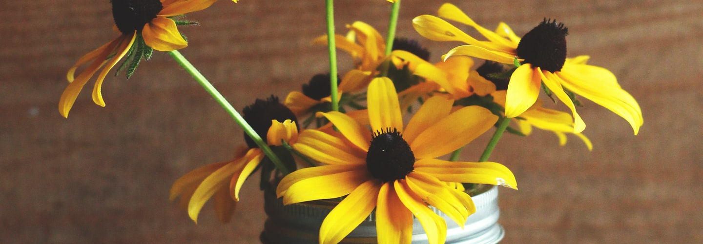 Diseases that Affect BlackEyed Susans in Michigan Gardens