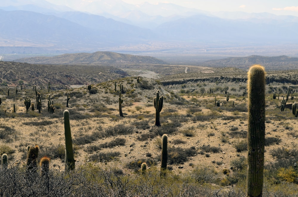 cacti and grass on hills