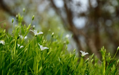 white petaled flowers blooms at daytime outdoor teams background