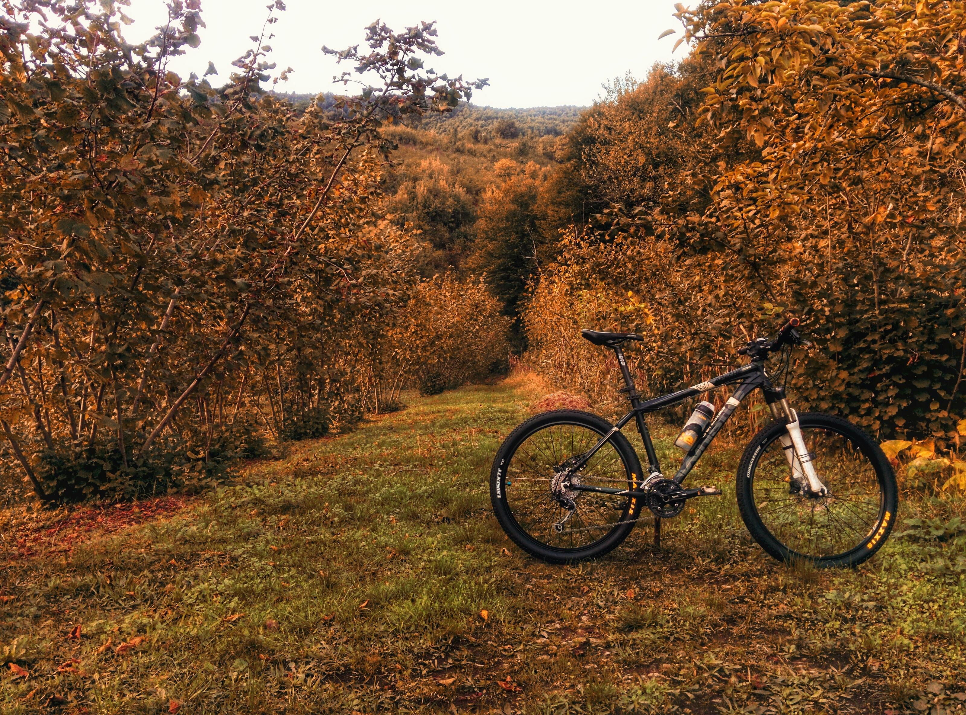 hardtail bike on grass field between trees