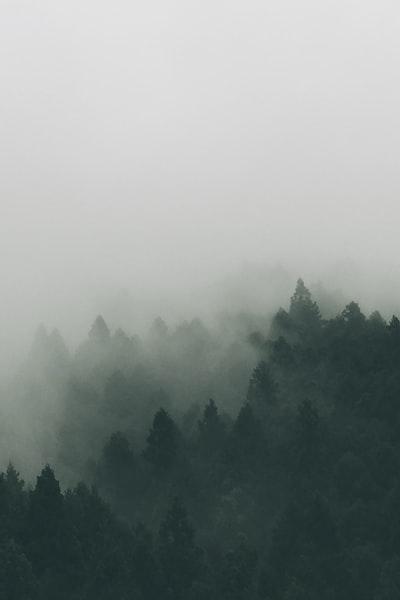 1271. Ködös tájakon