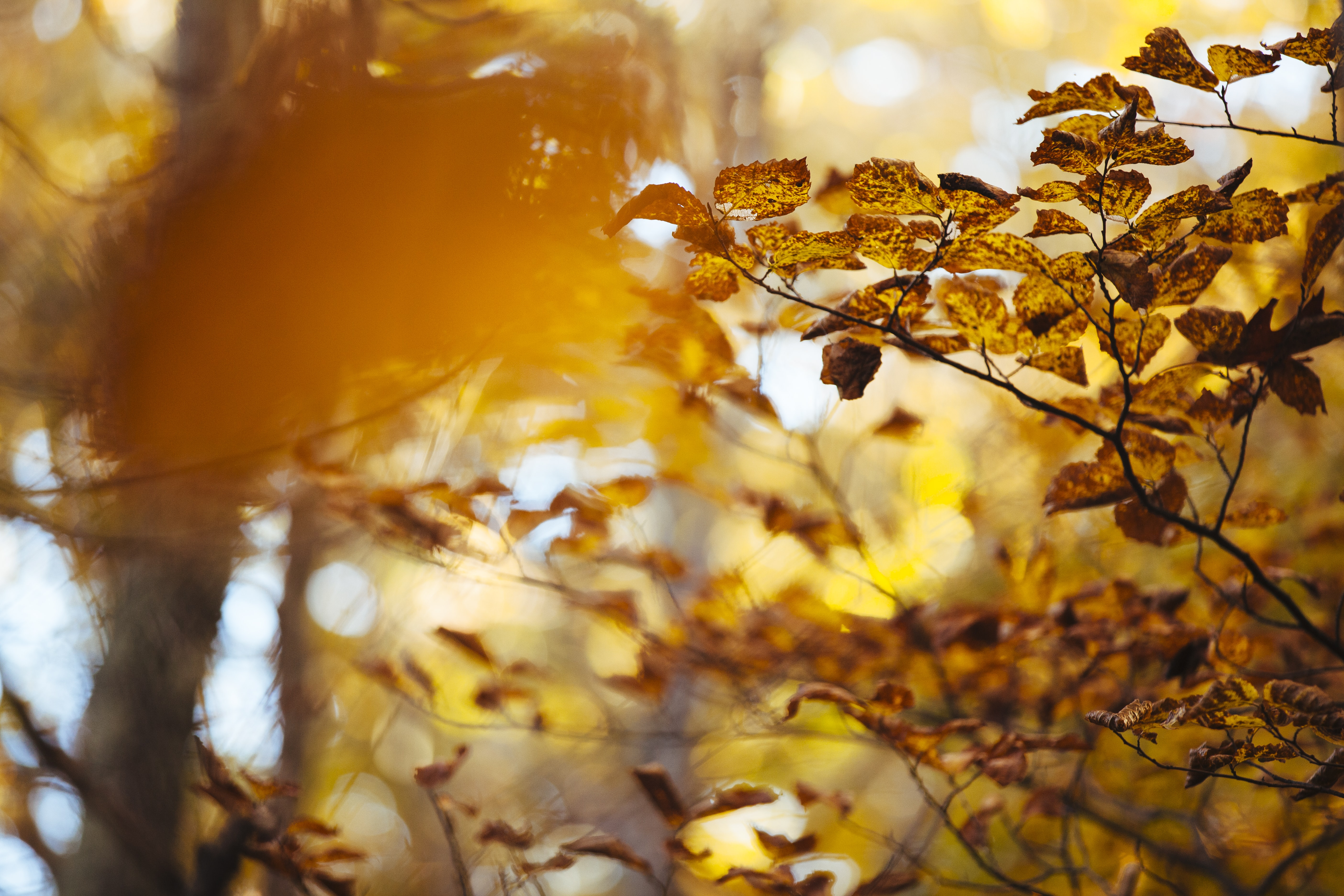 Sun shines over autumn leaves on trees in the forest