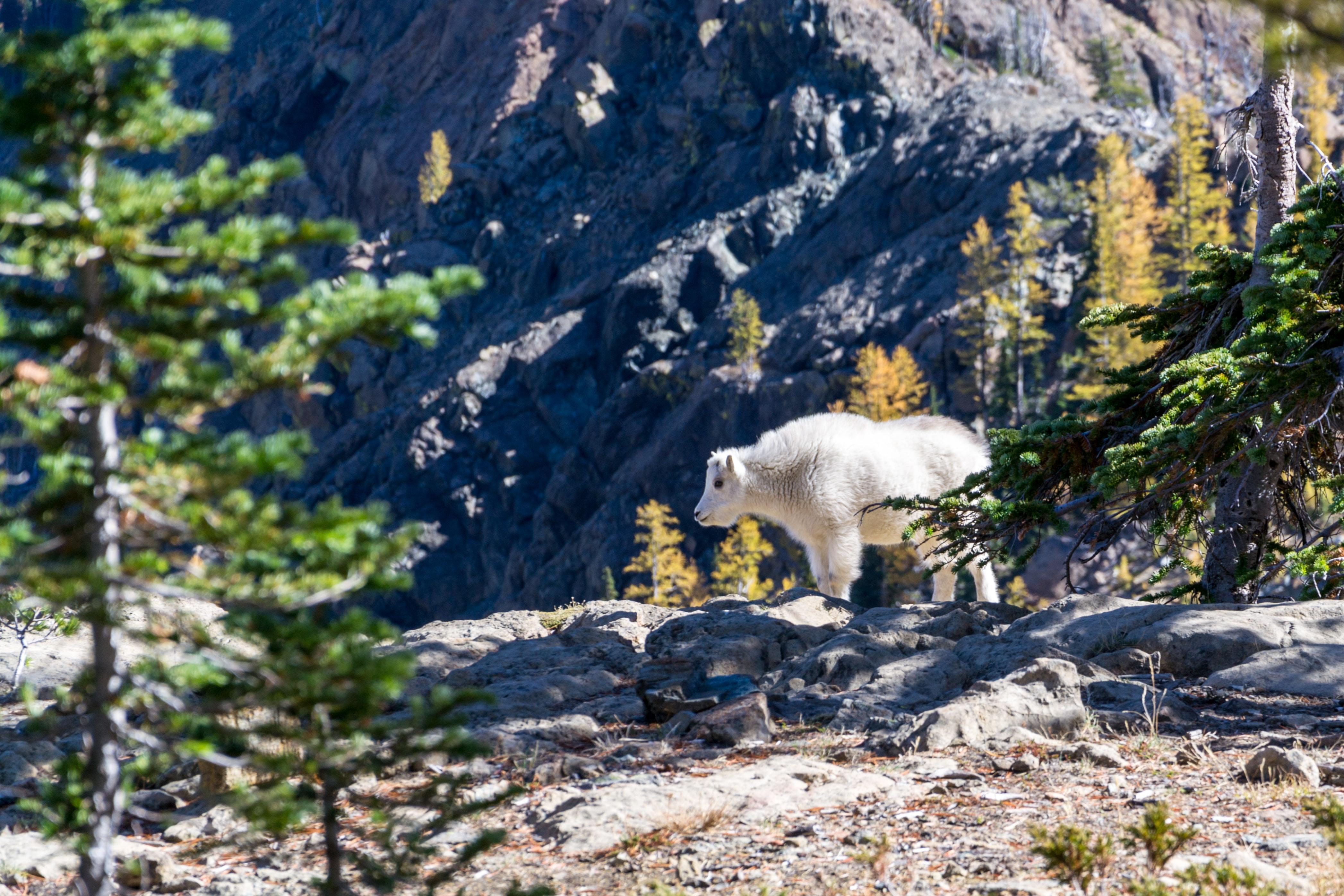 polar bear near on the trees
