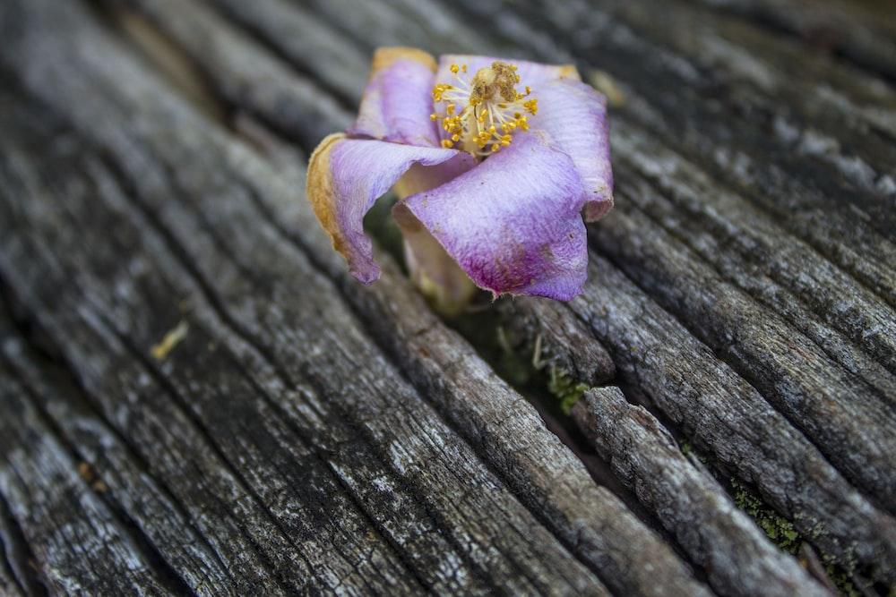 purple flower in tree