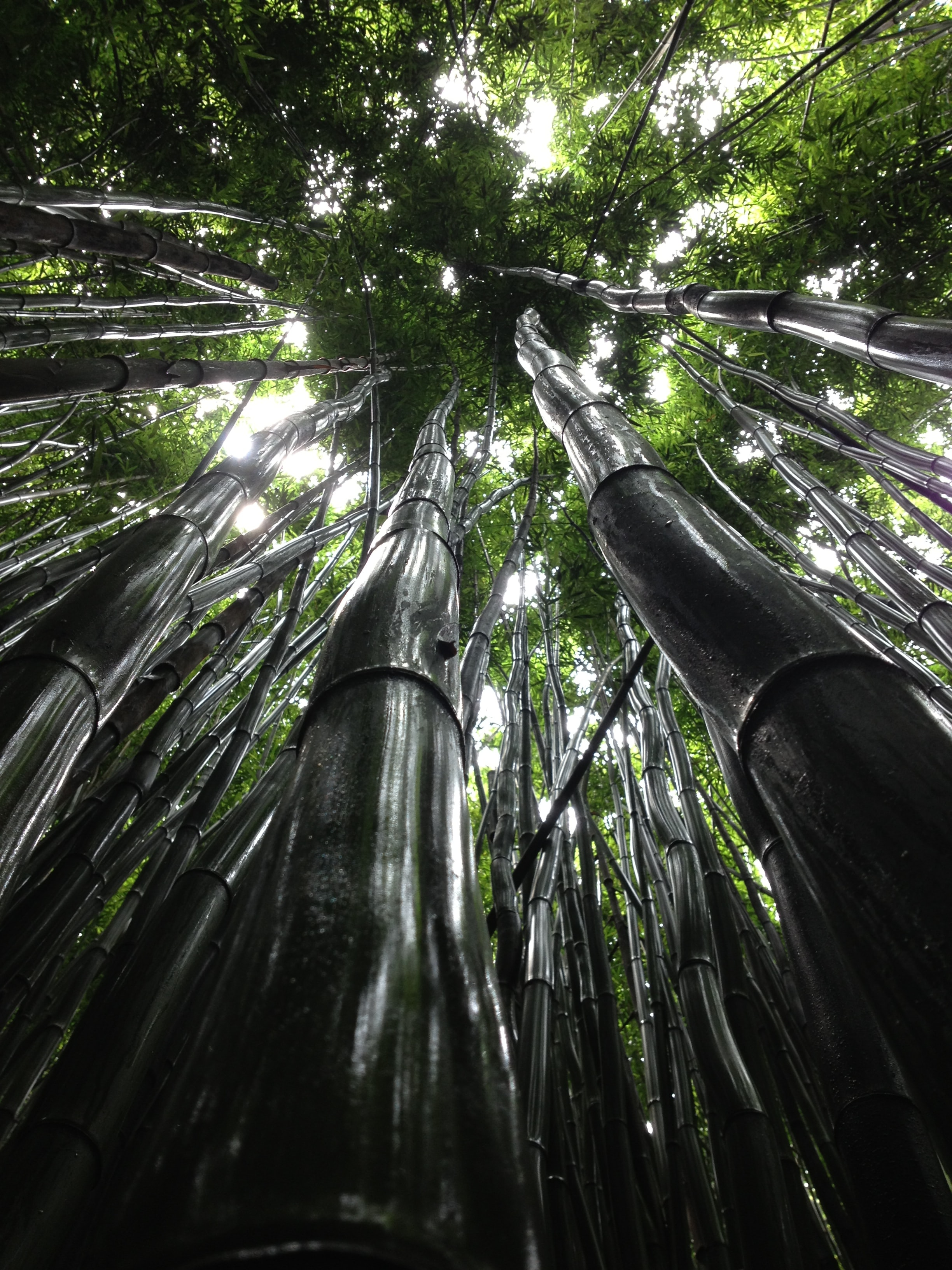 A low-angle shot of a canopy of moist bamboos