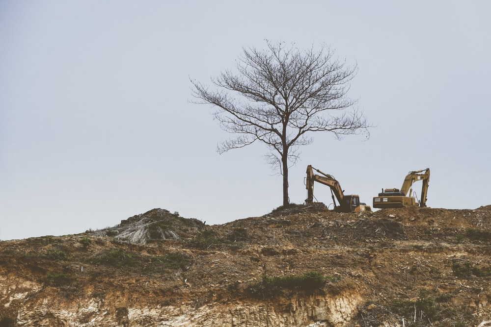 bare tree beside a yellow excavator