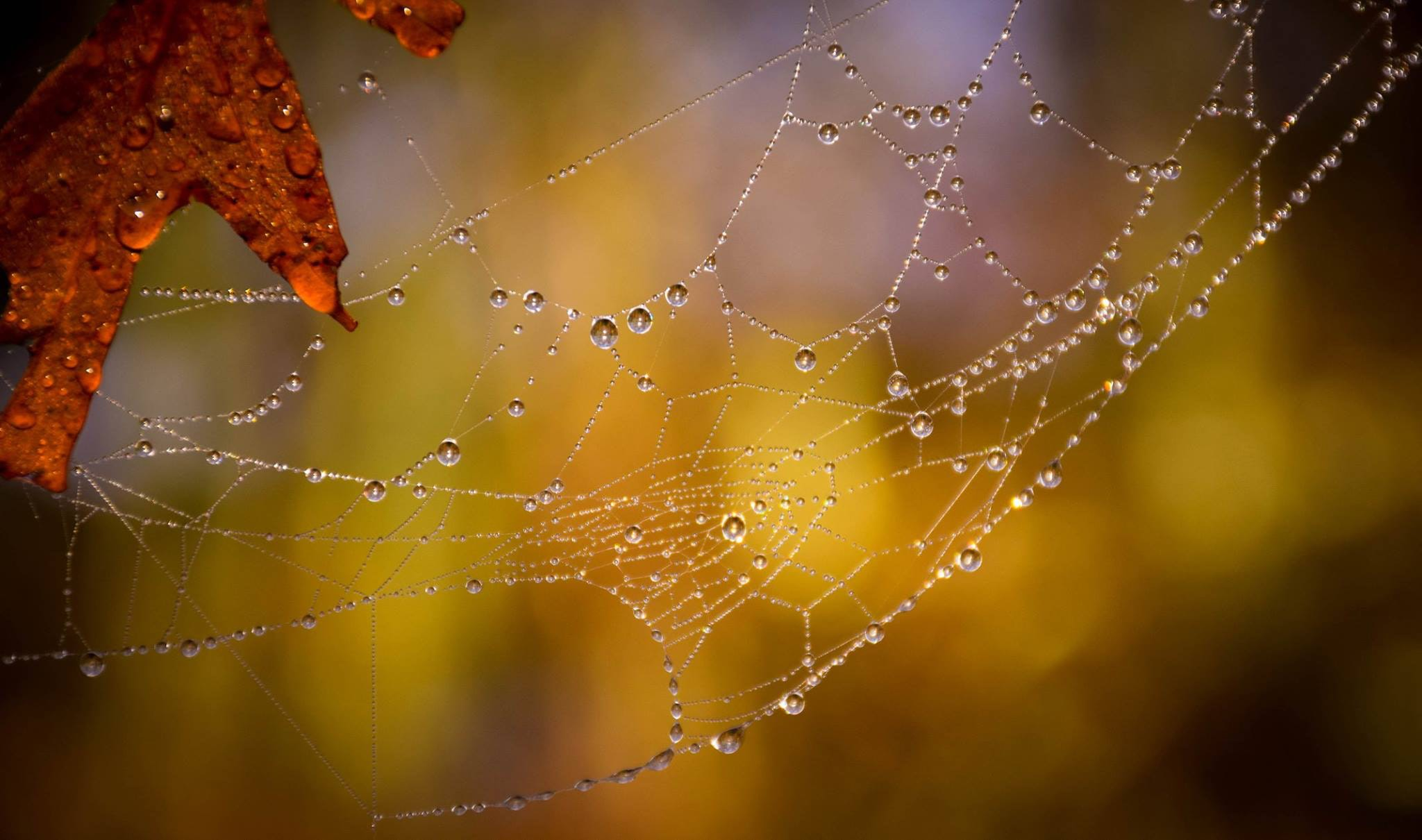 selective focused photo of a spider web with water drops